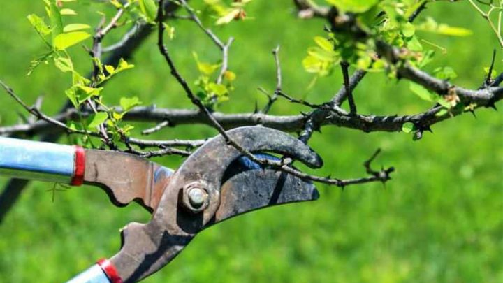 Professional Tree Pruning Services Lancaster Pa